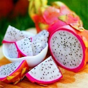 Fruit du Dragon made in Sénégal à 2200f les 250g